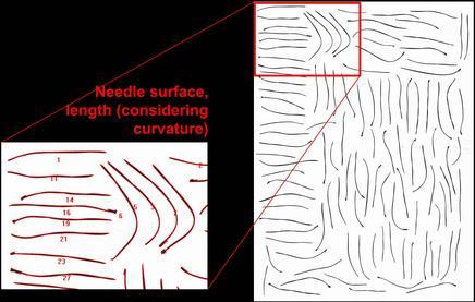 Conifer Needles