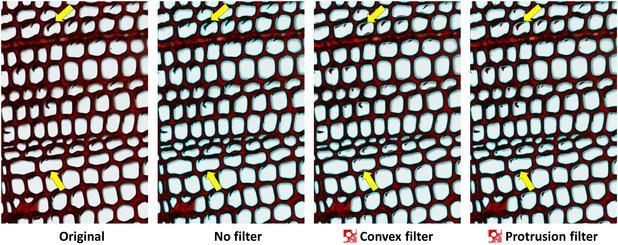 Protrusion filter