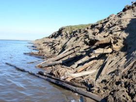 Lena Delta shorelines