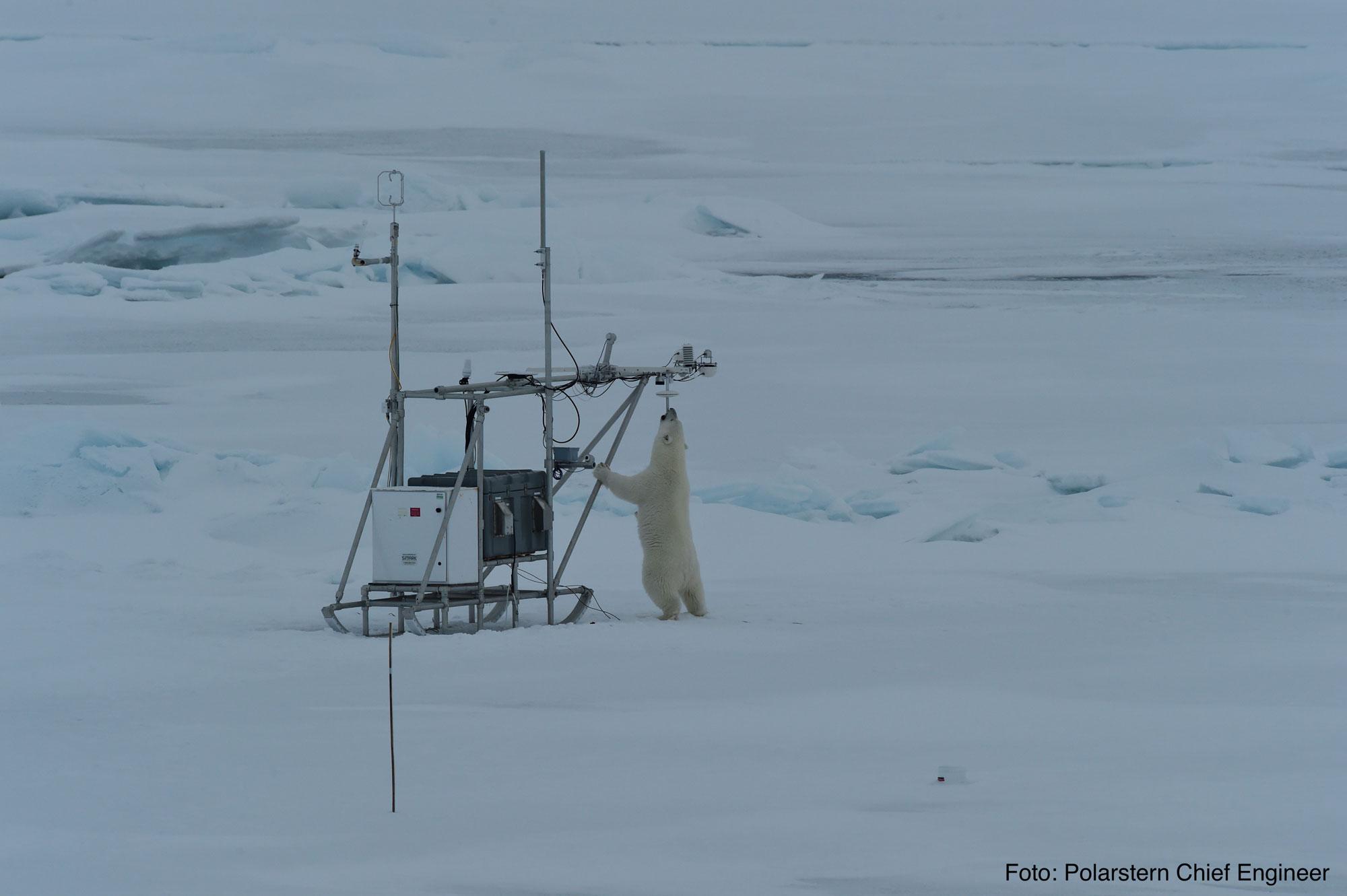 Sledges and polar bears - WSL