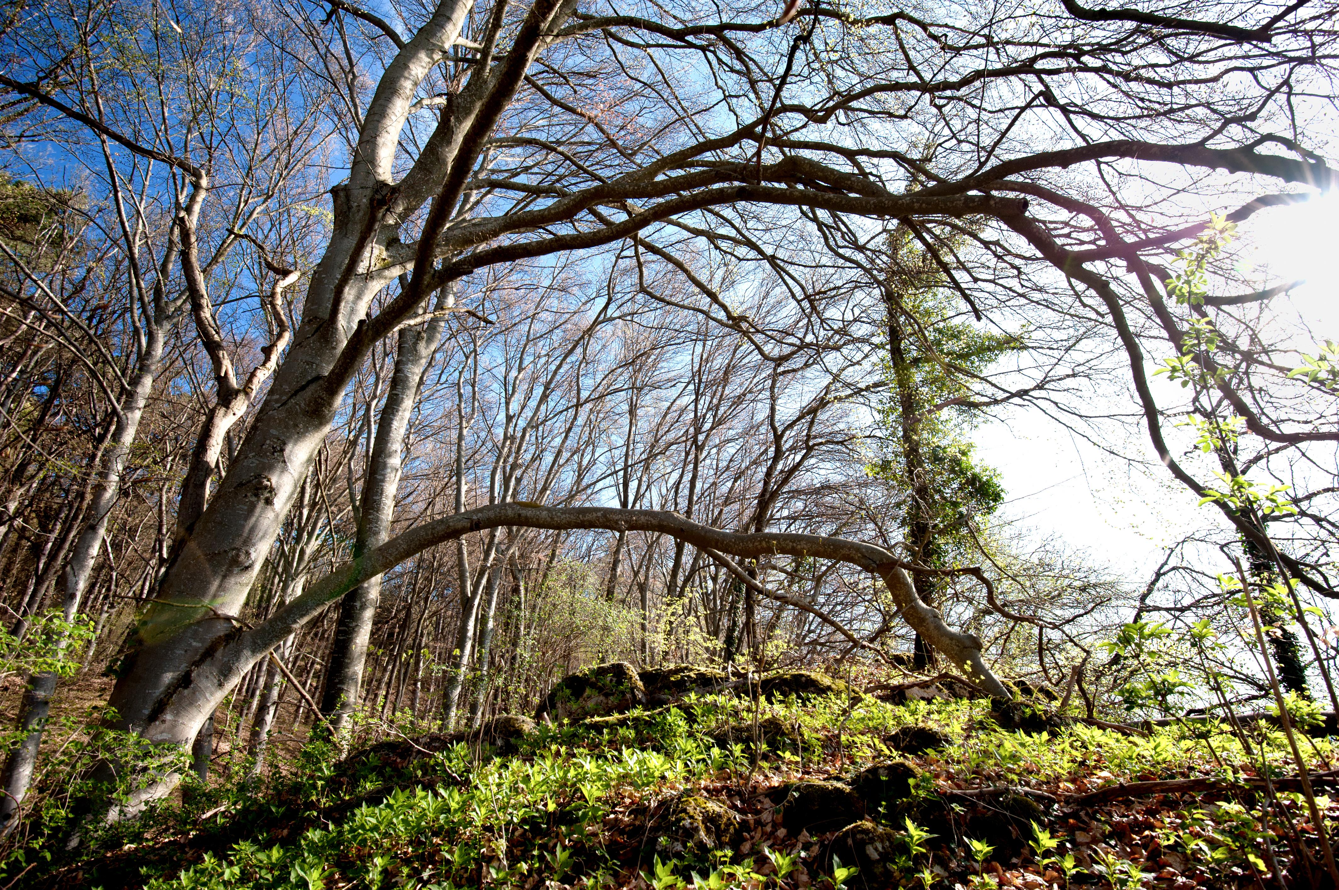 Forest Dynamics - WSL
