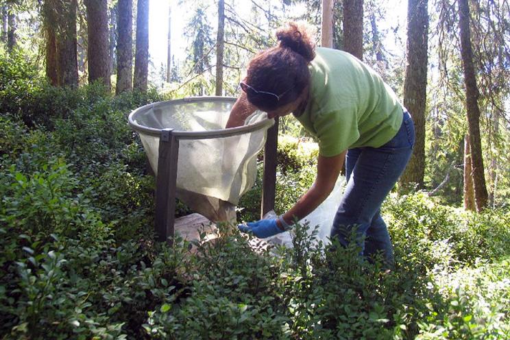 Langfristige Waldökosystemforschung LWF - WSL